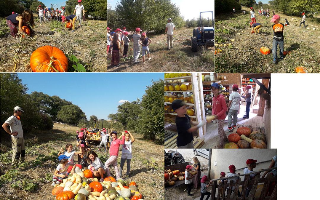 Aide en maraîchage: pour célébrer l'automne, la courge est en fête.