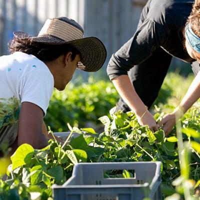 Notre lien à la terre, pratiques paysannes