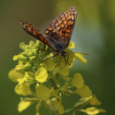 Biodiversité : maintien et préservation