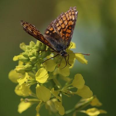 Séjour «La nature se réveille»
