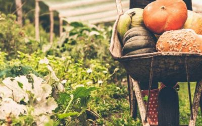 Autonomie alimentaire