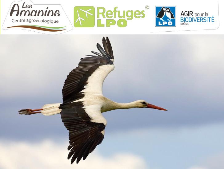 La migration des oiseaux – avec les Refuges LPO