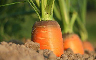 Quel avenir pour l'agriculture Française ?