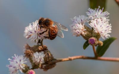 Agroécologie et biodiversité : un lien indéniable !
