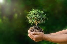 Théorie biorégionaliste : l'art d'habiter la Terre
